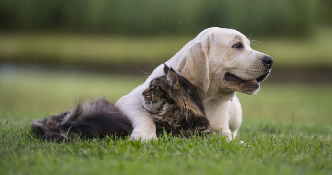 Benefits Of CBD Oil For Dogs-Improving Health Of Your Pet