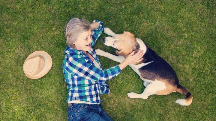 CBD oil for dogs website
